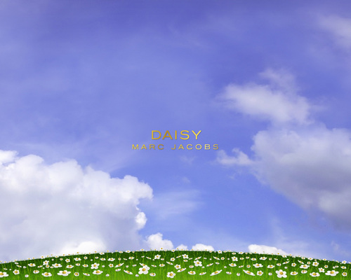 Marc Jacobs wallpaper entitled Daisy by Marc Jacobs