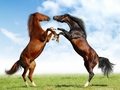Fight of Horses - horses wallpaper