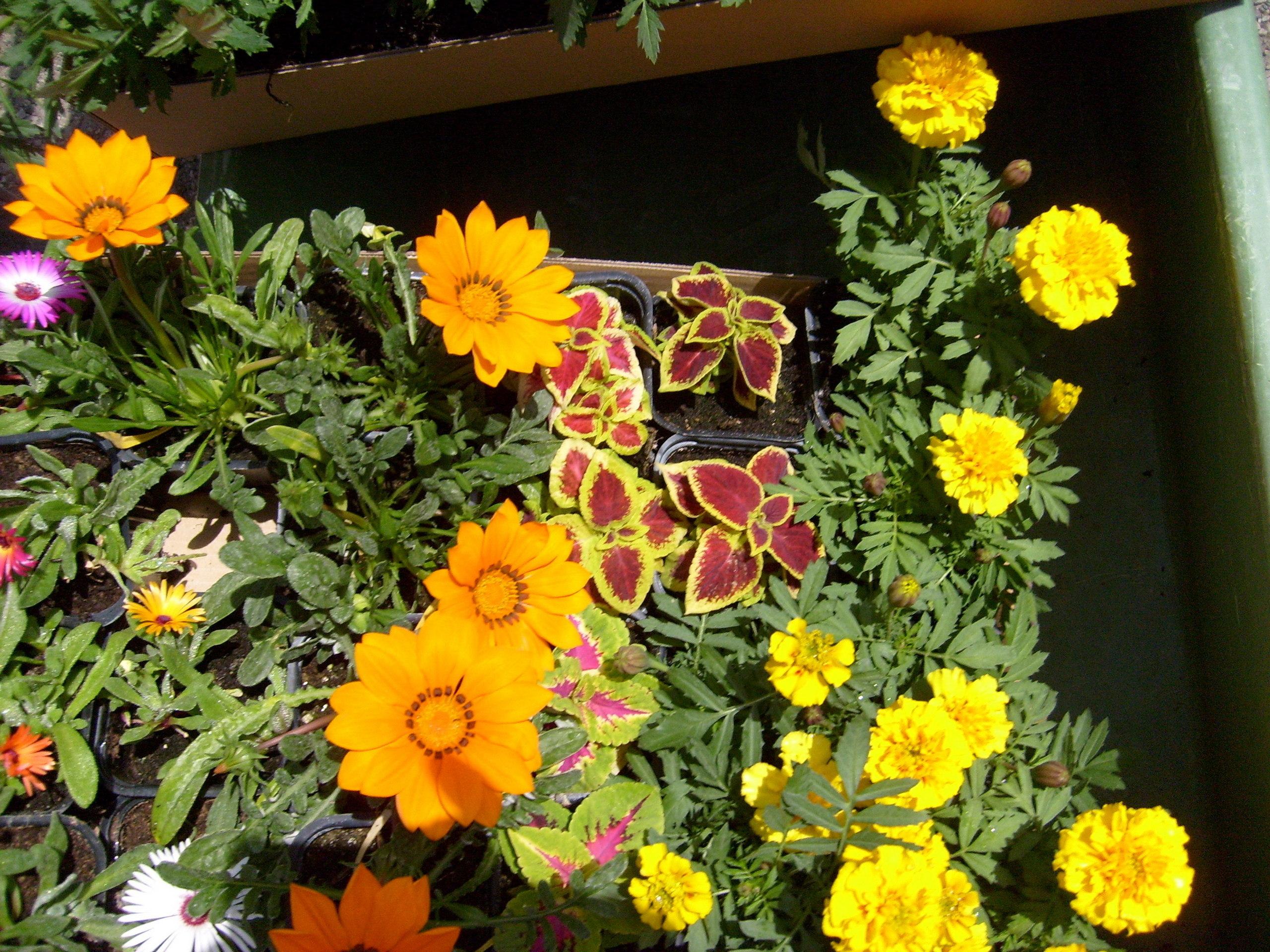 Spring Flowers Gardening Wallpaper 1417287 Fanpop