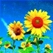 Sunflowers - flowers icon