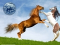 horsefight1 - horses wallpaper