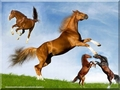 horsefight2 - horses wallpaper