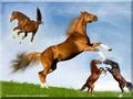 horsefight2