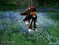 shadow peaceful  thoughts. - shadow-the-hedgehog photo
