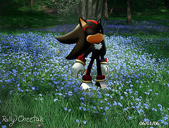 Shadow The Hedgehog wallpaper probably with a triceratops entitled shadow peaceful  thoughts.