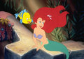 Ariel's Beauty