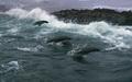 Cape Seals - planet-earth screencap