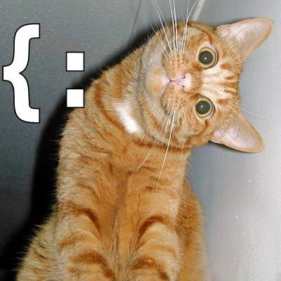 Animal Humor wallpaper with a tabby and a tom called LOLcats