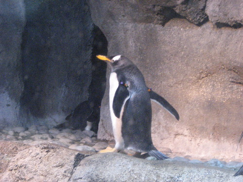 Pics from the zoo