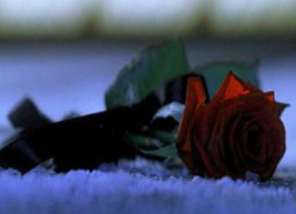 Roses - alws-phantom-of-the-opera-movie Photo