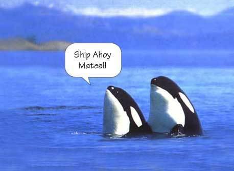 orca funny :D