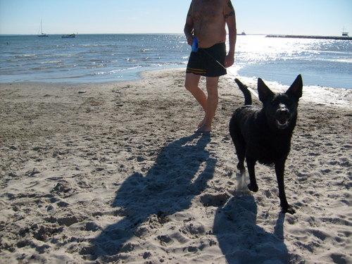 Alsatian on the playa