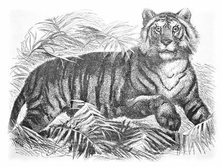 Crouching Tiger Hidden Dragon peminat Art