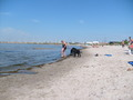 Dog 바닷가, 비치 in Sweden