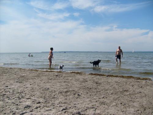 Dog ساحل سمندر, بیچ in Sweden