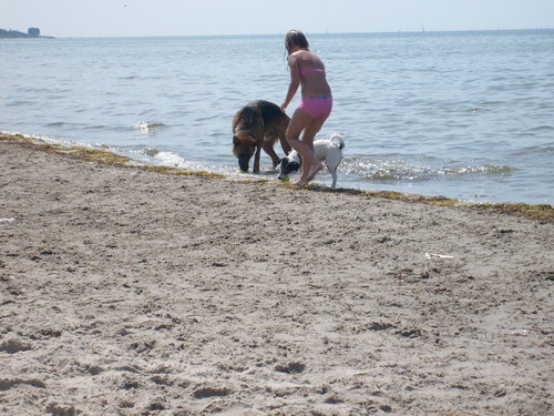 Dog beach, pwani in Sweden