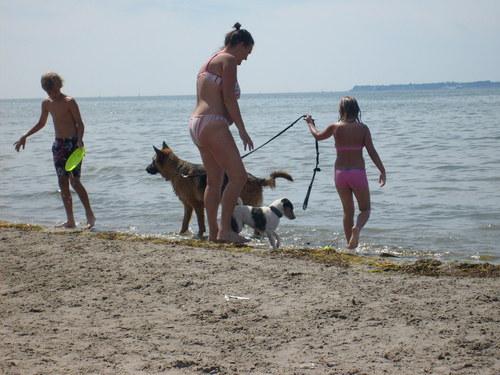Dog समुद्र तट in Sweden
