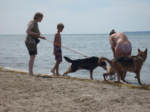 Dog strand in Sweden