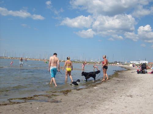 Dog bờ biển, bãi biển in Sweden