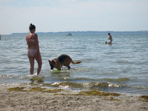 Dog Beach in Sweden