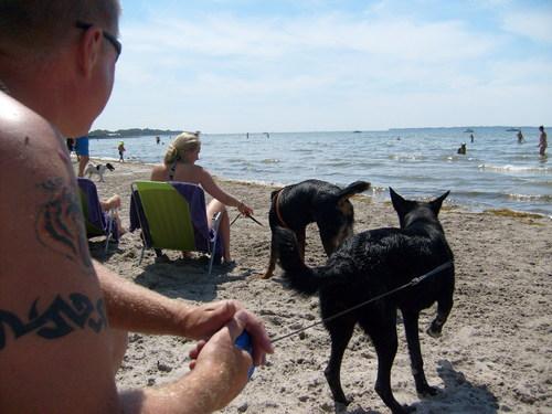 Dog ビーチ in Sweden