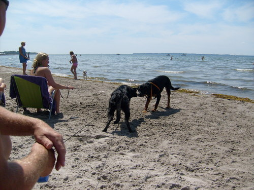 Dog strand in Sweden
