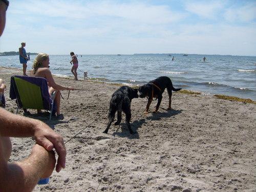 Dog spiaggia in Sweden