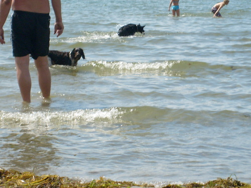 Dog playa in Sweden