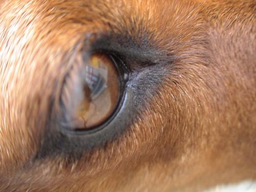 Spluq's dog - Figa