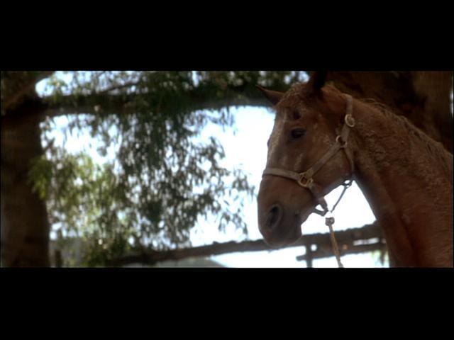 Horse Whisperer Movie