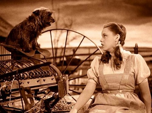 The Wizard of Oz wallpaper possibly containing an opossum called Wizard of Oz Screencaps
