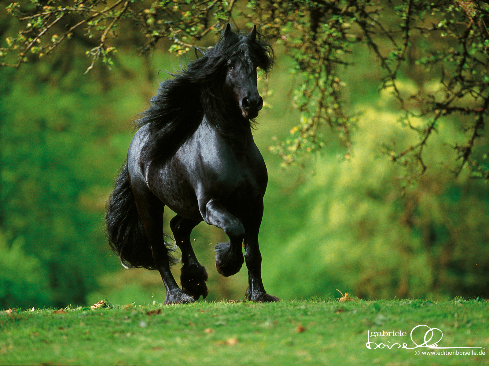 trained Horses Wallpaper Stallions Backgrounds Animals Backgrounds