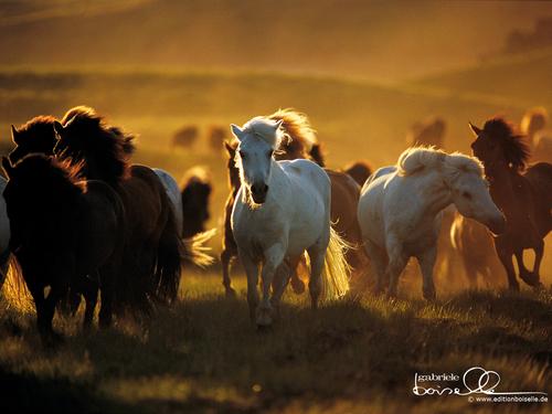 Horse achtergrond