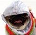 pugs - pugs icon