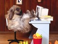 CEO Rabbit Relaxes - animal-humor wallpaper