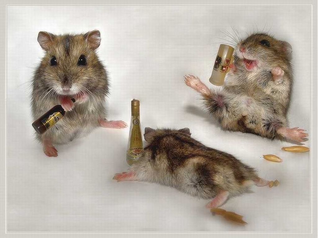 Animal humor drunk mice