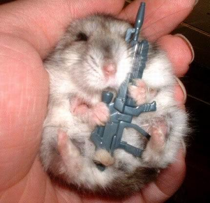 Hamsters wallpaper probably with a hamster titled Evil hamster