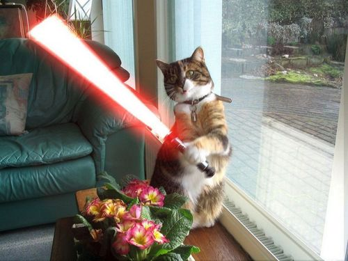 Animal Humor wallpaper containing a tom, a cat, and a kitten entitled Jedi Cat