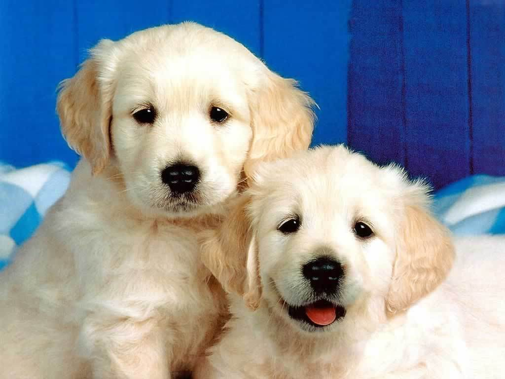 Dogs puppies