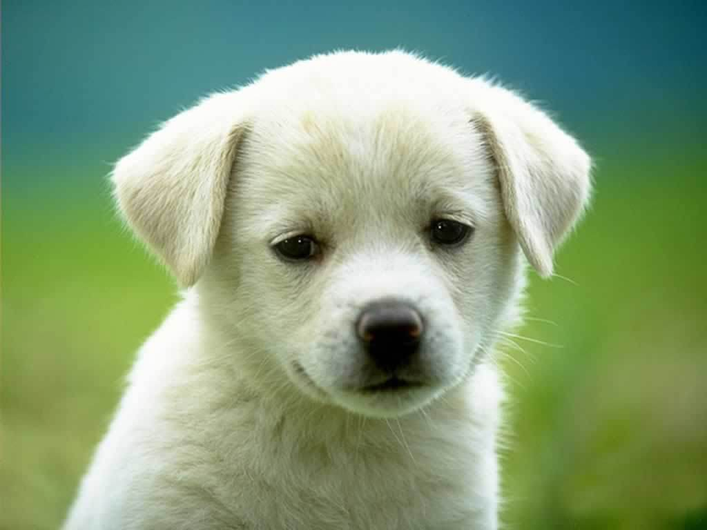 http://images1.fanpop.com/images/photos/1900000/Puppy-3-dogs-1993798-1024-768.jpg