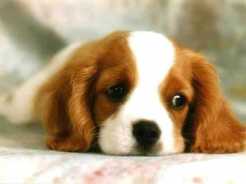 Puppy! <3