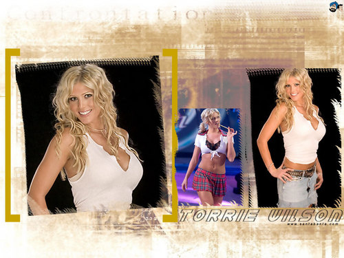 WWE Divas wallpaper probably with a portrait called WWE DIVAS