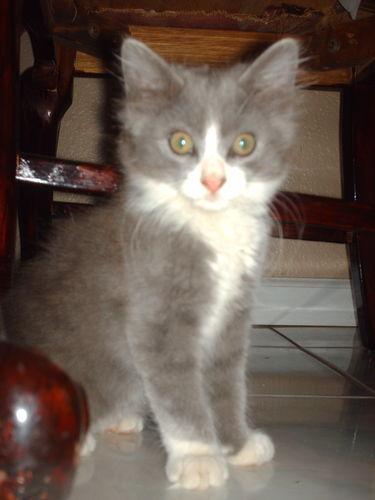 <MY CAT>