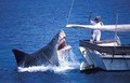 Another Ridiculous Shark Attack - jaws photo