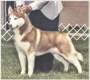 Another husky lol