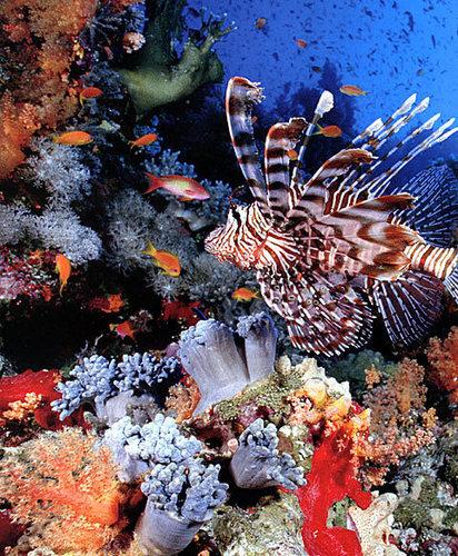 récif de corail, coral reef