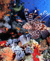 Coral Reef - sea-life photo