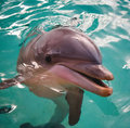 Dolphin<33333