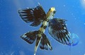 Flying fish! - sea-life photo