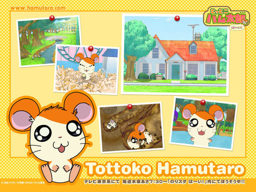 Hamtaro Wallpaper - hamtaro Wallpaper